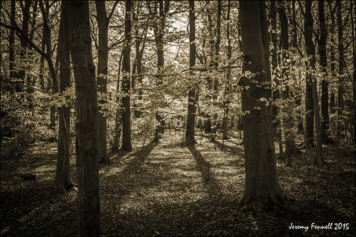 uk trees england southwest bristol april leighwoods 2015 earlymorninglight nikond7100 photographybyjeremyfennell bristolinmonochrome