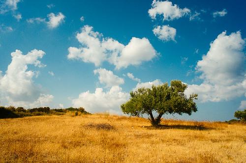 blue summer sky tree nature yellow landscape island mediterranean olive greece fields kythira kythera κύθηρα ricohgxr28mmf25