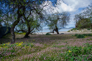 Alghero Beachscape | by Jordan Wilms