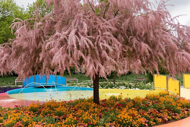 Perückenbaum am Farbbrunnen