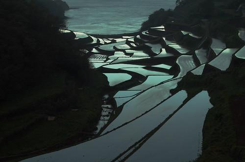 sunset sea water field landscape rice