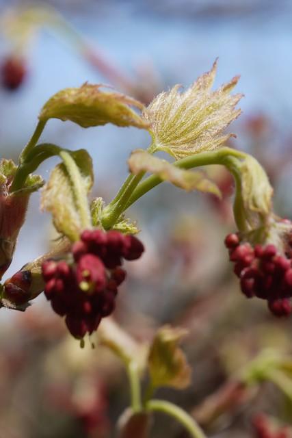 木, 2015-04-16 14:34 - Brooklyn Botanic Garden