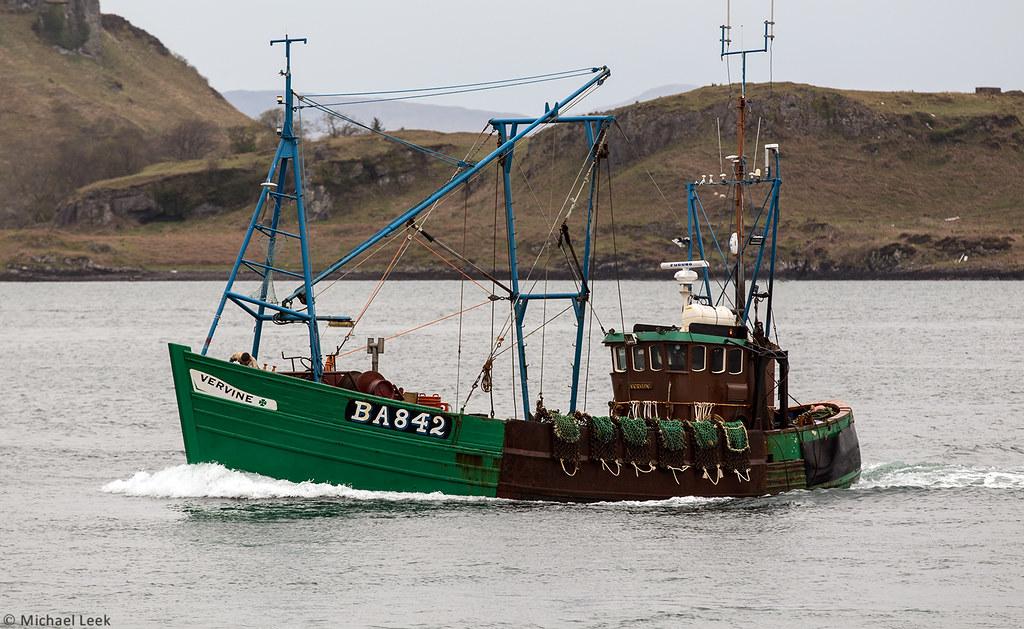 Scalloper Vervine (BA 842) entering Oban harbour, Scotland…