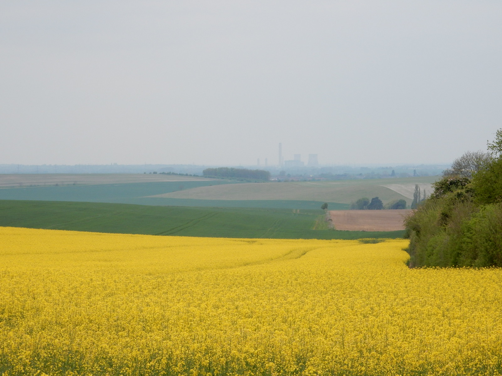 Rapefield with Didcot PS Going Circular via Hill Bottom