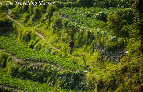 Barot (2) | by travelling slacker