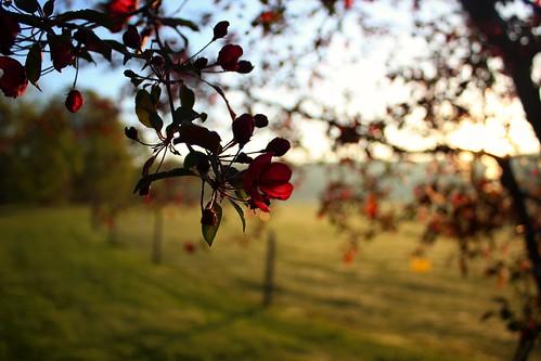 light canada flower tree sunrise canon spring quebec blossom bokeh earlymorning adil jamai rebelt3i coaticookvalley