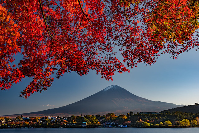 Mount Fuji under the autumn shade