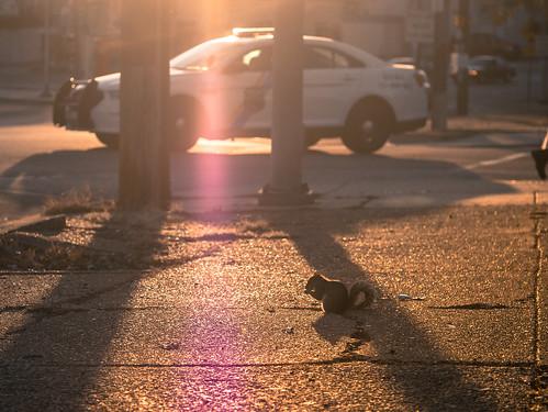 street sunset sunlight philadelphia golden squirrel shadows policecar poweltonavenue
