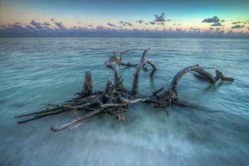 park sea tree water honda keys state florida bahia emerald grape hdr