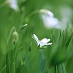 Green & White Alone