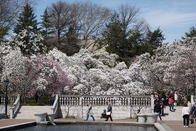 木, 2015-04-16 13:40 - Brooklyn Botanic Garden
