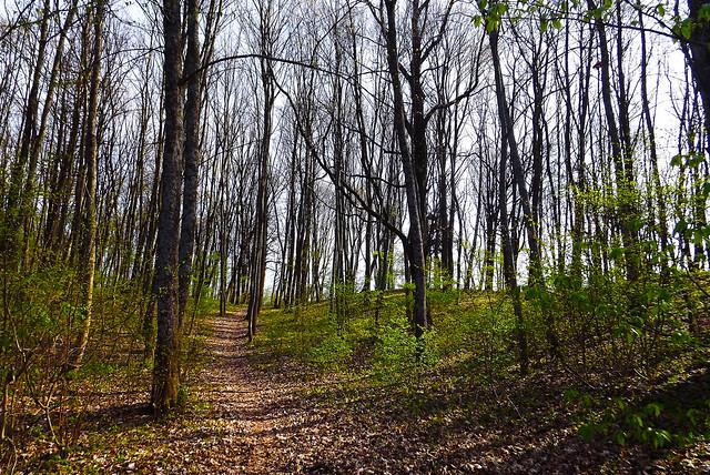 Spring Forest (10)
