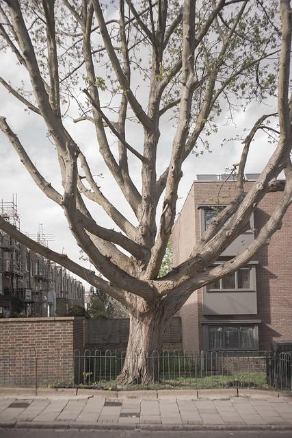 Tree, Islington