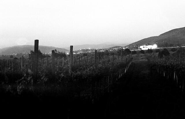 Nocturna del viñedo. Al fondo Museo del Vino (abril15N023)