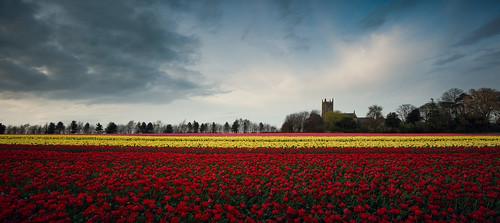 flowers red panorama church field yellow tulips pano wide band line tulip layers stmaryschurch yellowflowers redflowers