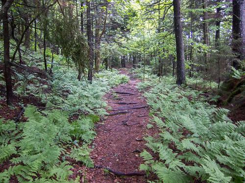 moosemountain newhampshire hiking hanover unitedstates us