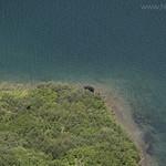 Moose at head of Gunsight Lake