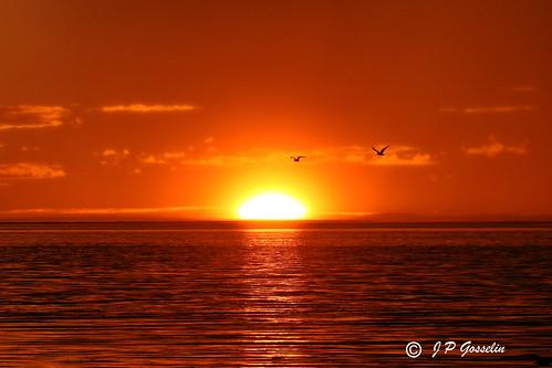 SUNSET OVER  ST. LAWRENCE RIVER  |   REFORD GARDENS   | LES JARDINS DE METIS  |  COUCHER DE SOLEIL  |   GASPESIE  |  QUEBEC   |  CANADA | by J P Gosselin