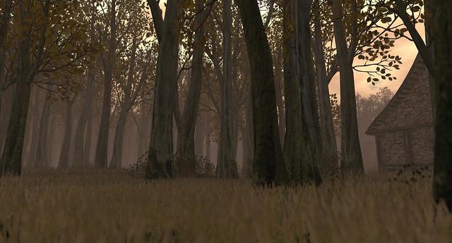 Driftwood Forest