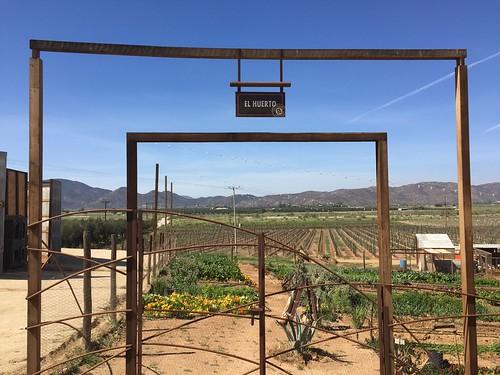 Valle de Guadalupe y Ensenada   by la flowers
