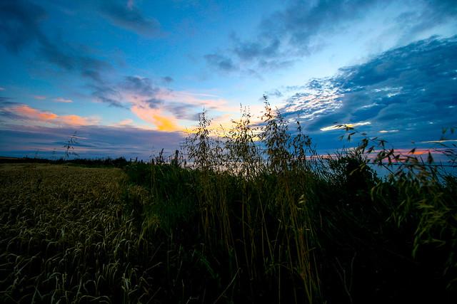Fence at dawn