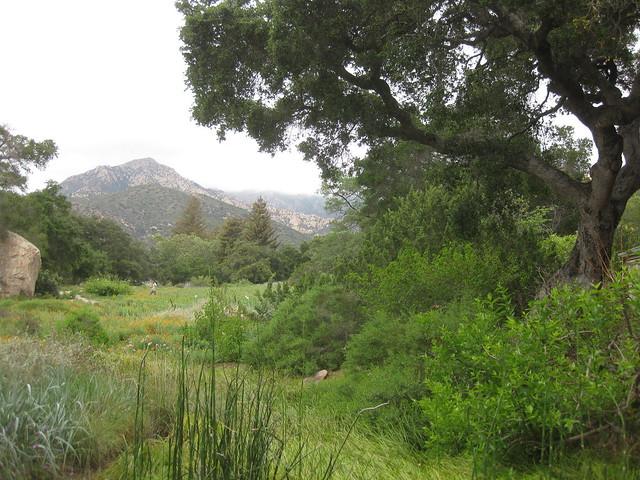 IMG_2693 Santa Barbara Botanic garden art