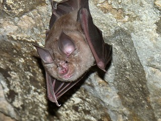 hohenfels bat | by U.S. Army IMCOM