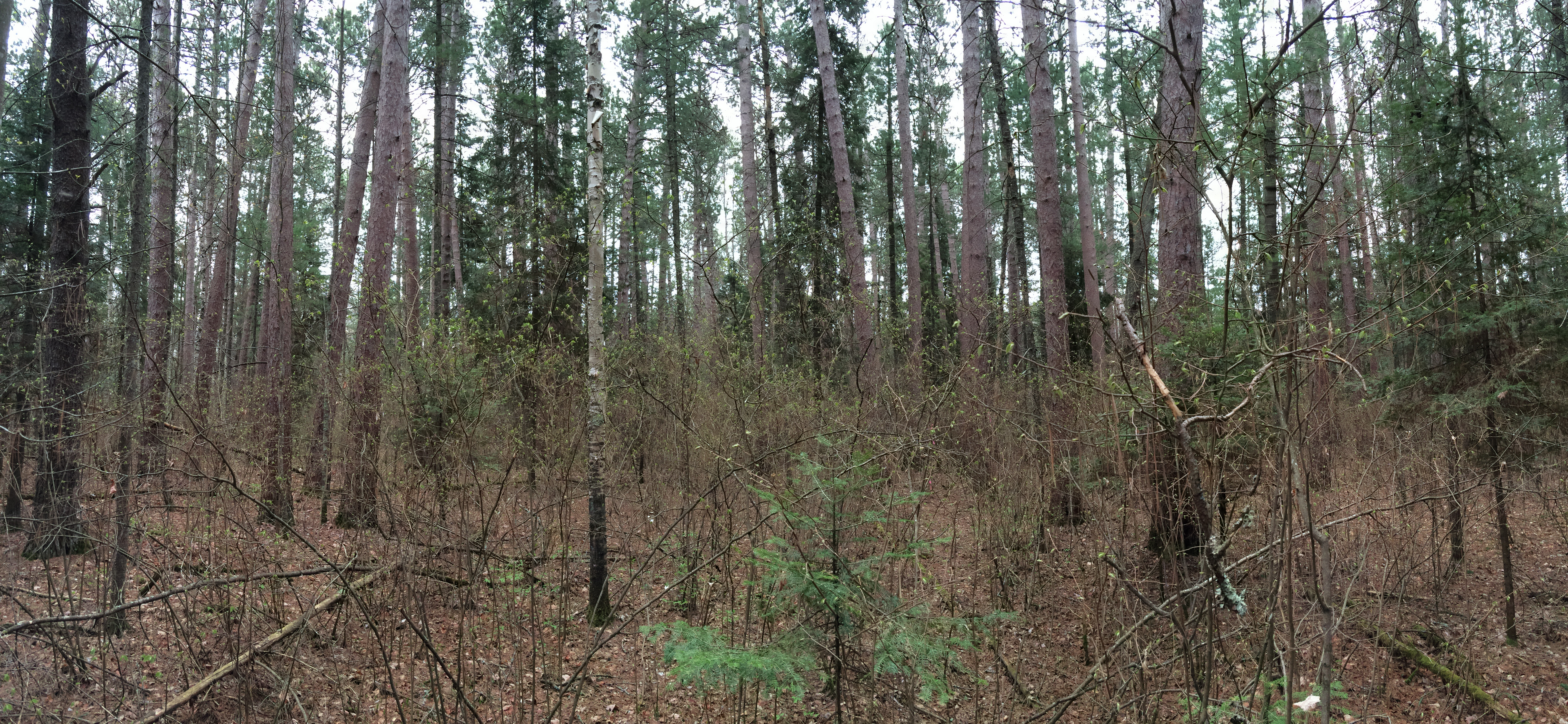 Elevation of Pine Valley Trail System White Pine Loop ...