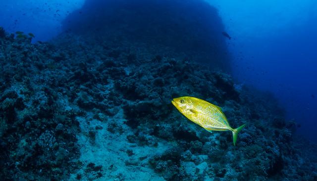 Mer rouge-croisière sud