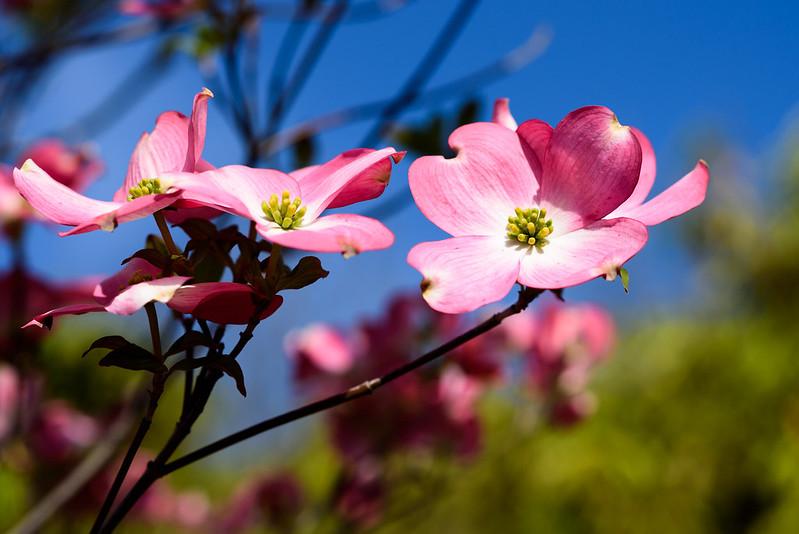 4月22日のお花
