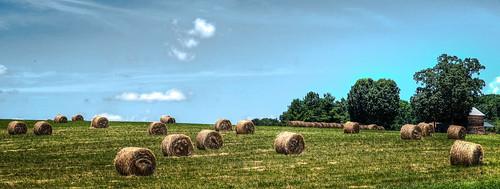 usa virginia farm gretna fujifilm hay haybales roundbales xt1 bobbell pittsylvania sansogm nongmoagriculture stopgylphosatepoisoning saveorganicfarmers supportsmallerfarms