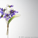 2015 スミレブローチ Viola mandshurica 01