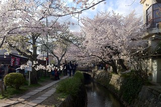 Philosopher's Walk - Kyoto (iPhone4) | by destebani