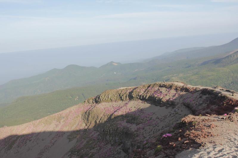 高千穂峰 ミヤマキリシマ