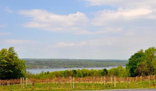 lake newyork vineyard spring afternoon hector senecalake fingerlake ihadagoodtime viewtothewest senecalakewinetrail fingerlakeswine penguinbaywinery 40mileslong 64kmlong 617feetdeep 188mdeep