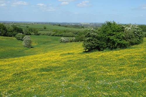 trees grass canon landscape countryside view may powershot oxford grassland hawthorn buttercups dreamingspires sx280