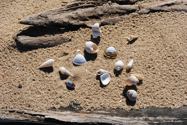 shells and driftwood