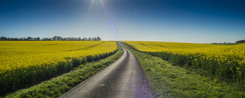Yellow is the colour of Spring in Wiltshire