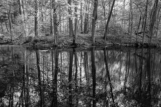 Swamp reflection | by Richard-