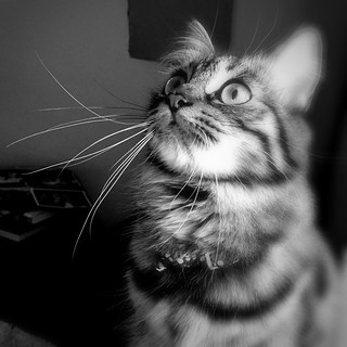 #cat | by -be@