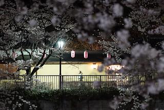 Sakura@bunkyouku_03