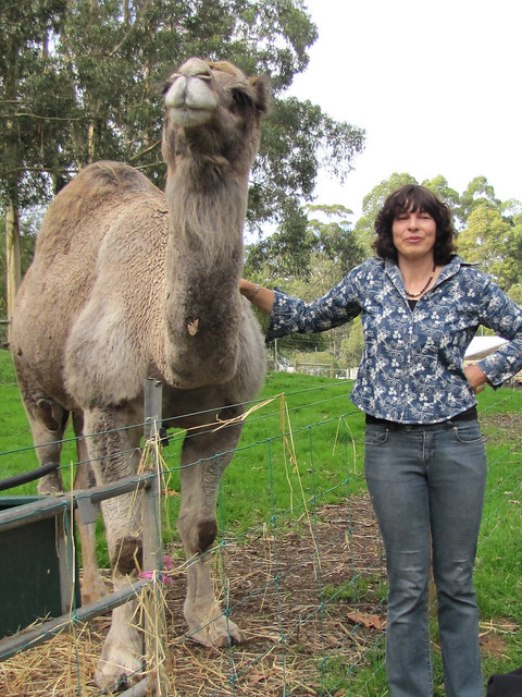Even Camels Have Itchy Spots I – Denmark, Western Australia