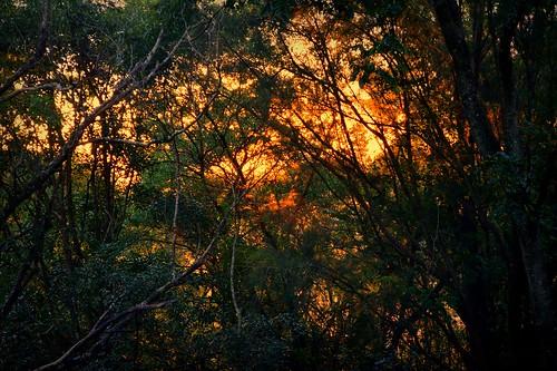 sunset scrub thicket bush tamborinemountain sequeensland queensland australia sunsetlight autumn mounttamborine