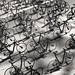 flock of bicycles