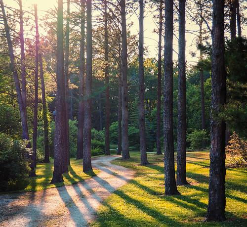 park sun plant tree forest landscape outdoor path arboretum serene