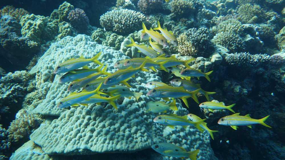 2013 - Safari Rotes Meer