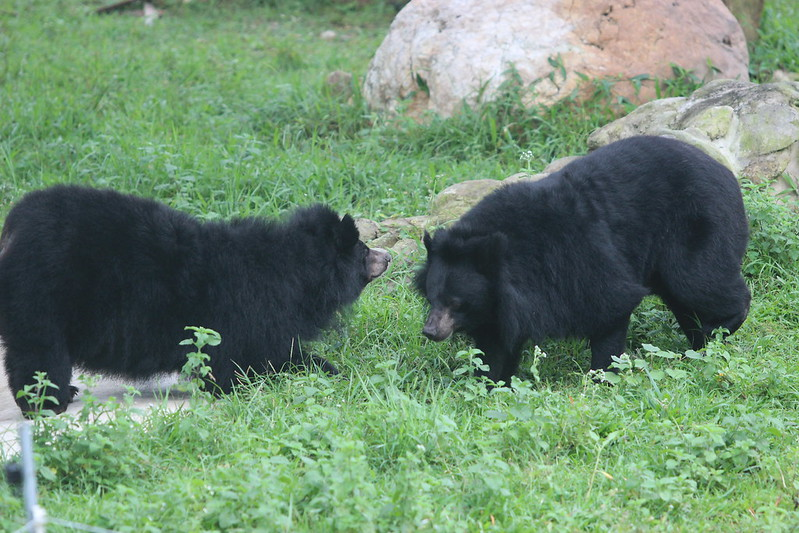 Mama and Moggy hanging out in their enclosure at VBRC 2