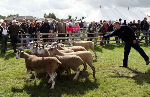 dumfries show | by dumfriesshow