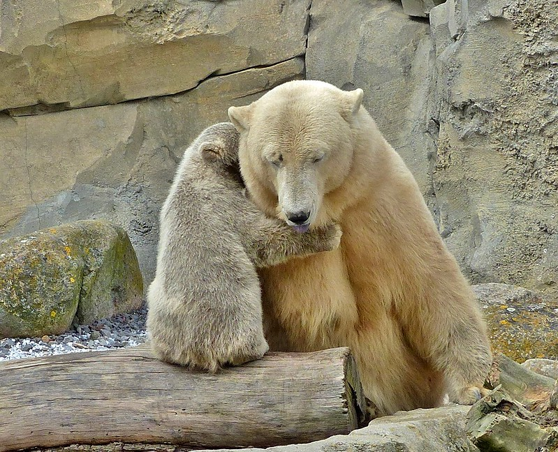 Every bear, so fat and funny, loves his mother more than honey :)