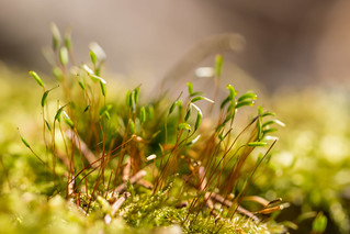 Moss up close | by Infomastern